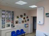 Клиника Дзержинская ветеринарная лечебница, фото №2